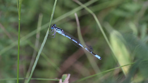 dragonfly close-up Stock Video Footage