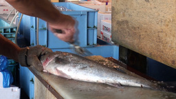 Cleaning Fish With An Iron Brush At The Tsukiji Fi stock footage