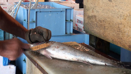 Cleaning fish with an iron brush at the Tsukiji fi Stock Video Footage