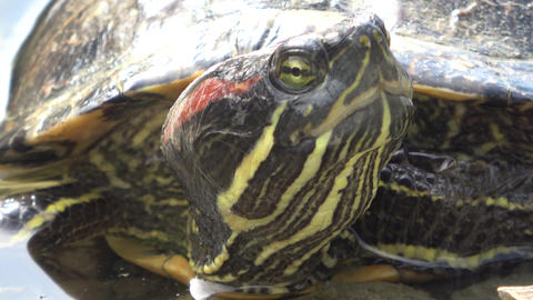Turtle close up Live Action