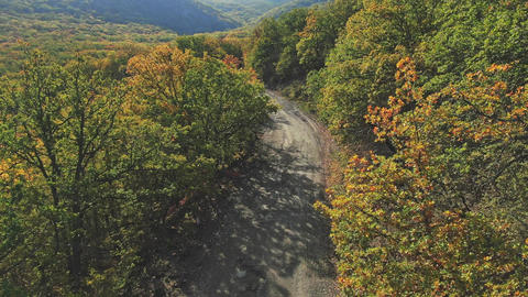 Aerial view. Flight over the old scenic road in the mountains covered with colorful autumn forest Live Action