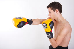 boxer ภาพถ่าย