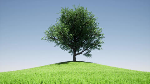 One tree hill Blue sky green landscape summer field nature background Animation