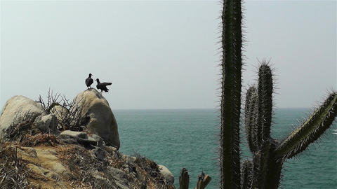 Black Vultures in Oaxaca Mexico 3 Stock Video Footage
