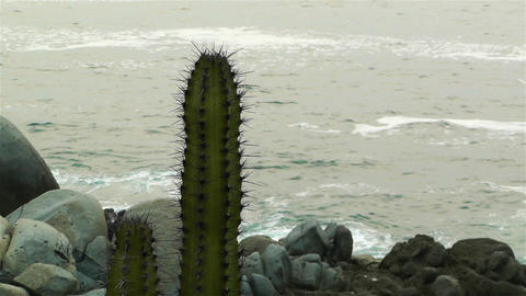 Cactus in the Beach 2 Stock Video Footage