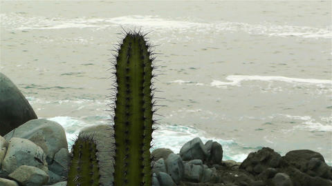Cactus in the Beach 2 Footage
