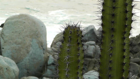 Cactus in the Beach 3 1 Stock Video Footage