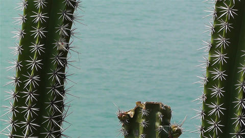 Cactus in the Beach 5 Stock Video Footage