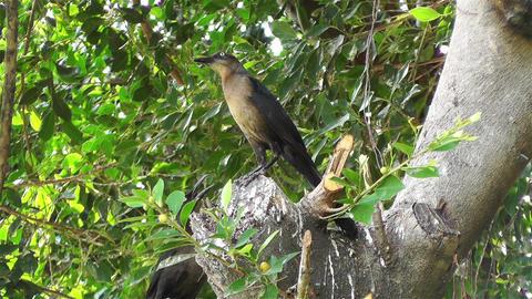 Mexican Bird Footage