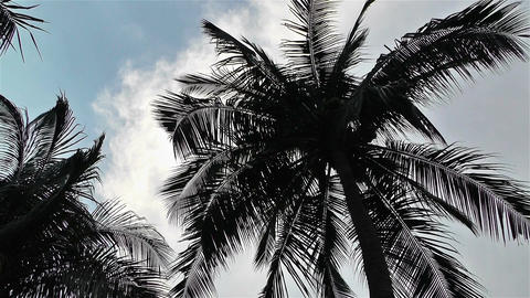Palm Trees 1 lowangle Stock Video Footage