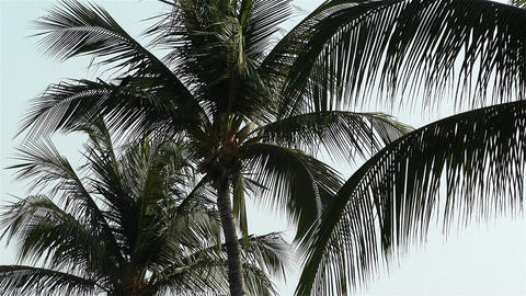 Palm Trees 2 Stock Video Footage