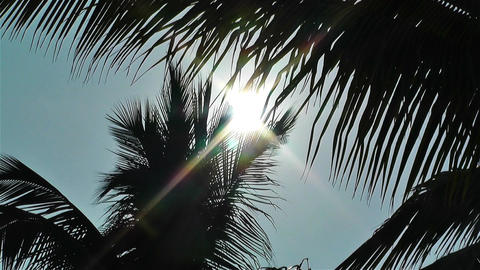 Palm Trees Lowangle against Sun 1 Footage