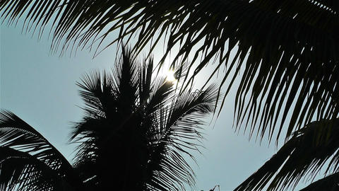 Palm Trees Lowangle against Sun 1 Stock Video Footage