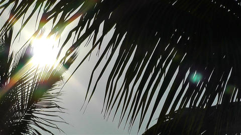 Palm Trees Lowangle against Sun 3 Stock Video Footage
