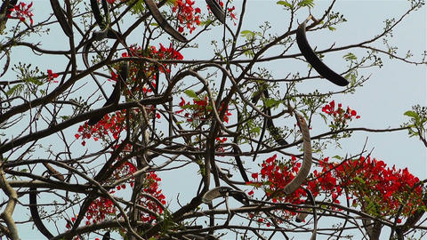 Tropical Flowers 1 Stock Video Footage