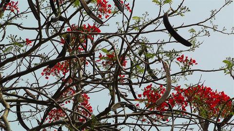 Tropical Flowers 1 Footage