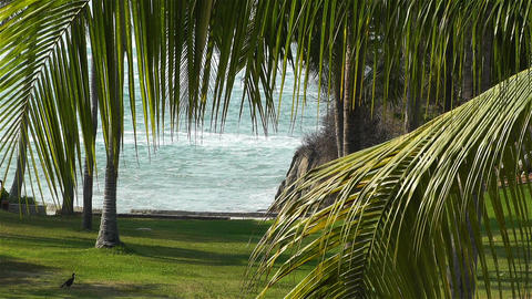 Tropical Paradise in Mexico 27 palm trees Stock Video Footage