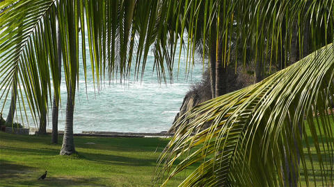 Tropical Paradise in Mexico 27 palm trees Footage