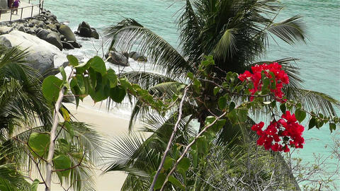 Tropical Paradise in Mexico 33 flowers Stock Video Footage