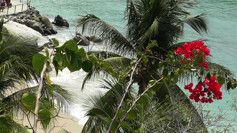 Tropical Paradise in Mexico 33 flowers Footage