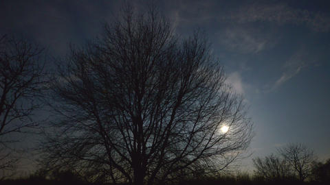 4k UHD moon rise behind tree 10893 Footage