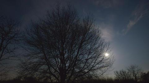 4k UHD moon rise behind tree 10893 Stock Video Footage