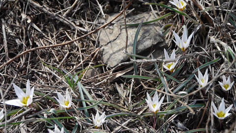 white wildflower swing in wind Stock Video Footage