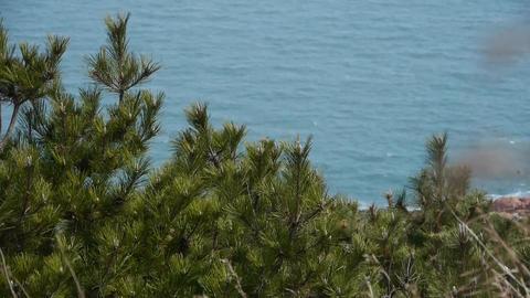 swing pine in wind,blur seascape backgrounds Stock Video Footage
