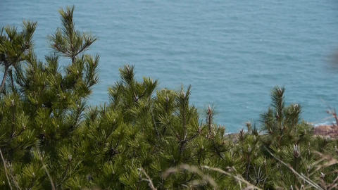 swing pine in wind,blur seascape backgrounds Footage