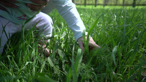 Child's Hand Tries To Pick The Green Grass. Mom Supports Child. Green Grass Live Action