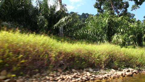 Forest of tropical Asia Stock Video Footage