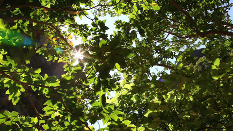Sunlight Stock Video Footage