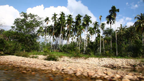 River in the jungle Stock Video Footage