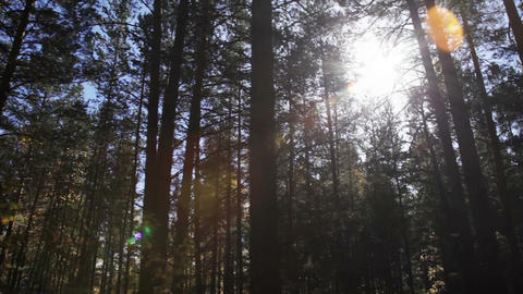 Walking in the woods Stock Video Footage