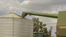 Header Augering Oats into a Field Bin Footage