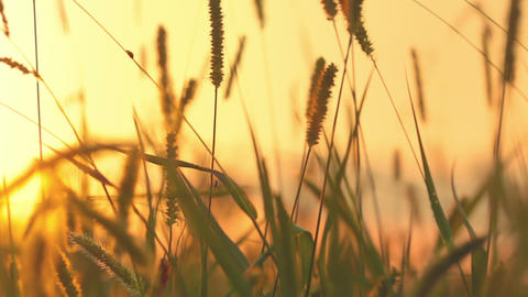 Grass And Sunset stock footage