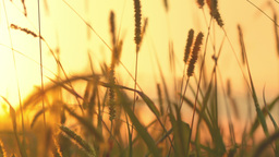 Grass and sunset Stock Video Footage