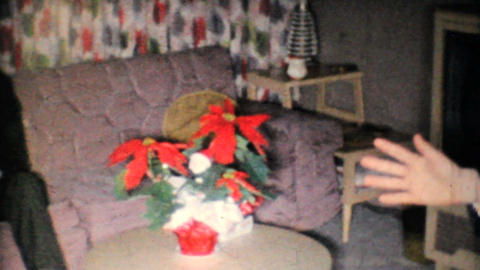 Young Couple Admires Poinsettia Plant At Christmas 1962... Stock Video Footage