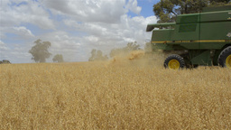 Farmer Harvesting an Oats Crop around a Tree Stock Video Footage