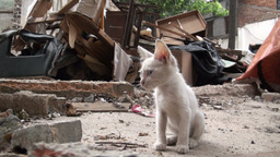 Young white kitten (cat) in the middle of a demoli Stock Video Footage