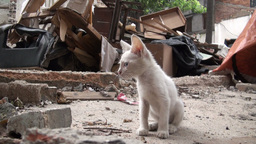 Young white kitten (cat) in the middle of a demoli Footage
