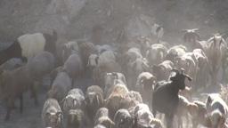 Herding sheep in village of Northern Pakistan Stock Video Footage