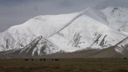 Massive mountains and yaks grazing in Karakoram Ra Stock Video Footage