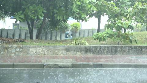 Tropic rain Footage
