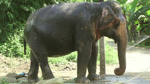 Washing the elephant Stock Video Footage