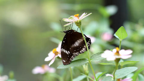 Butterfly Upside Down Stock Video Footage