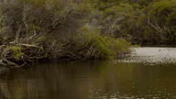 Floating Along the Moore River Stock Video Footage