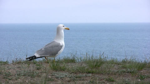 Seagull flies away Stock Video Footage