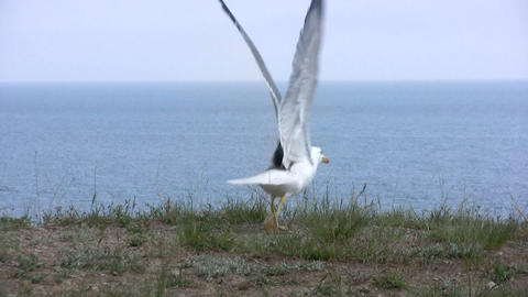 Seagull flies away Stock Video Footage