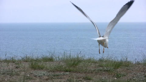 Seagull flies away Footage